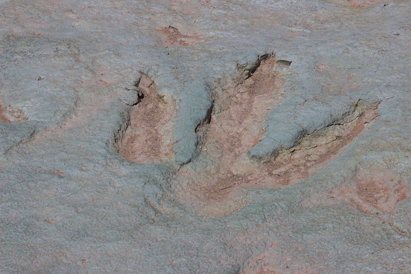 Dinosaur Tracks, Museums and Hikes — Discover Moab, Utah