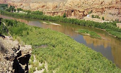 Tamarisk Tree Discover Moab Utah