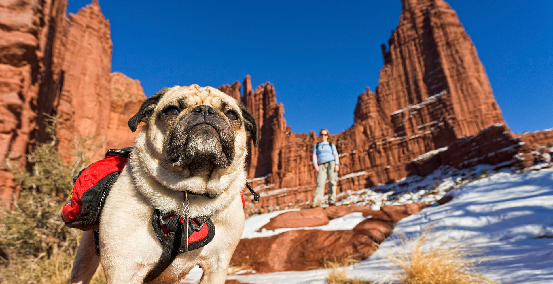 Pet friendly hiking at Fisher Towers