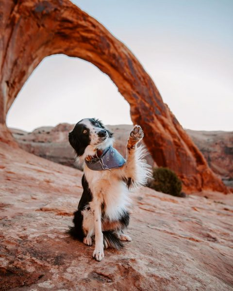 A dog in front of the Corona Arch in Moab, Utah